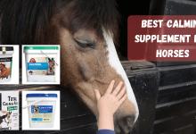 Best Calming Supplement For Horses