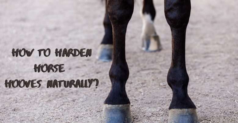 How to Harden Horse Hooves Naturally? – Make Horse Hooves Healthy