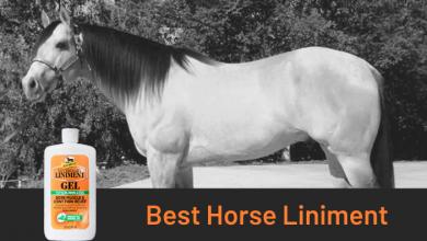 Best Horse Liniment
