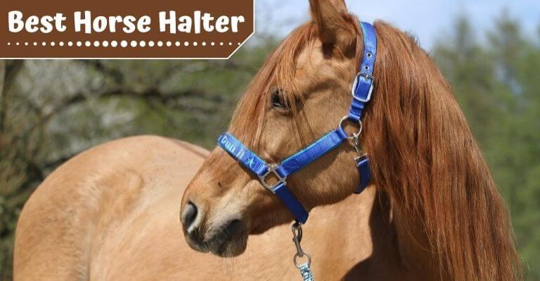 Best Horse Halter
