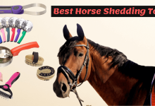Best Horse Shedding Tool