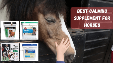 Best Calming Supplement For Horses