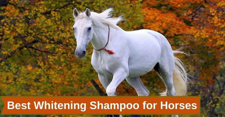 Best Whitening Shampoo for Horses