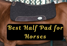 Best Half Pad for Horses