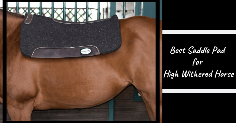 High Withered Horse Saddle Pad