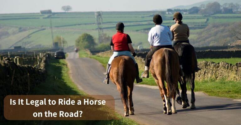 Is It Legal to Ride a Horse on the Road_