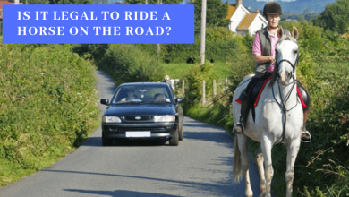 Is it legal to ride a horse on the road