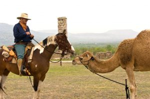 Can Camels run faster than Horses?