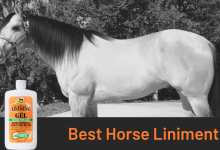 Best Horse Liniment
