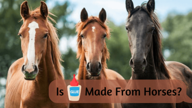 Is Glue Made From Horses_ (1)