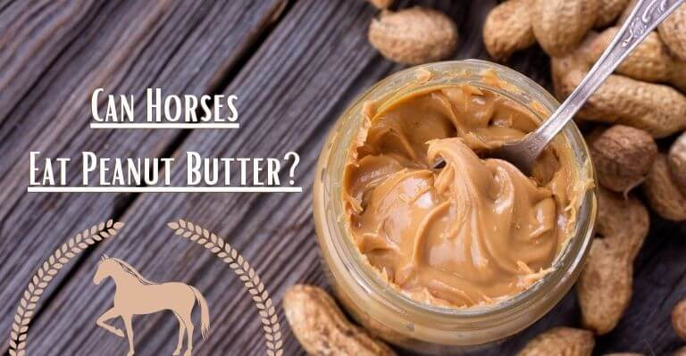 Can Horses Eat Peanut Butter_