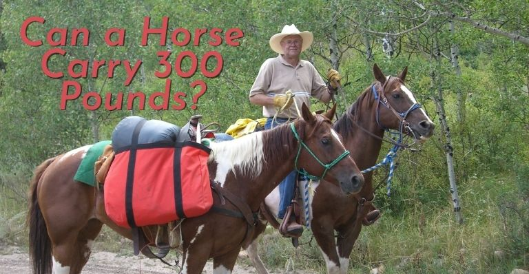 Can a Horse Carry 300 Pounds_