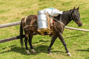 How-Much-Weight-Should-A-Horse-Carry-2